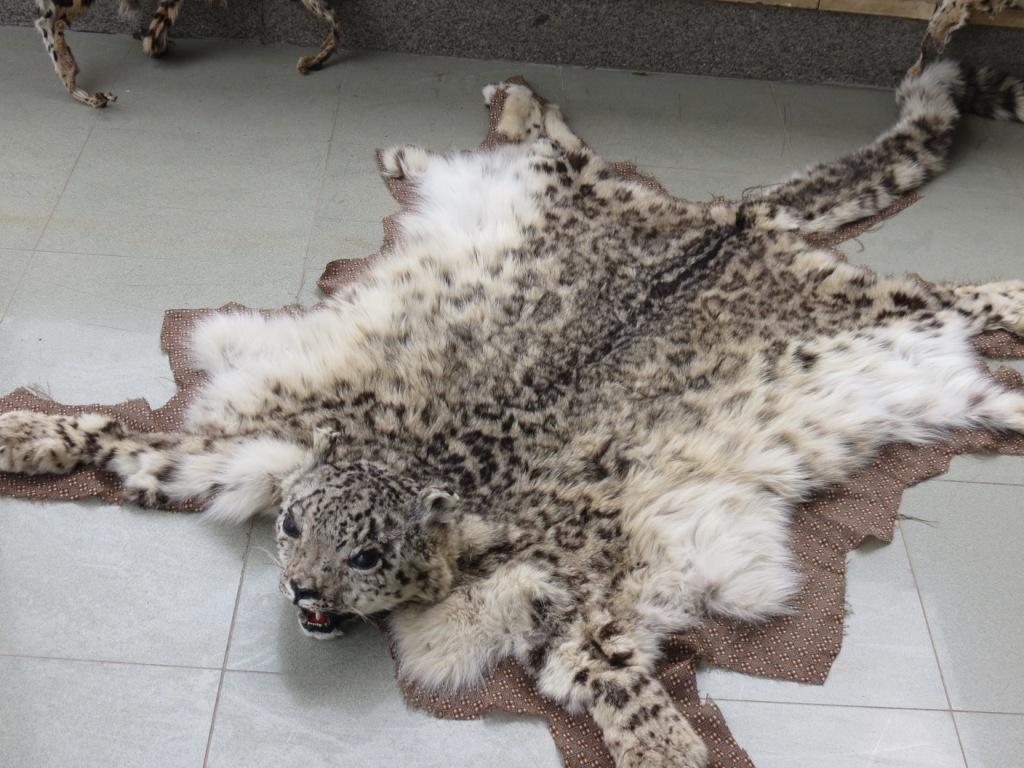 قیمت پوست حیوانات