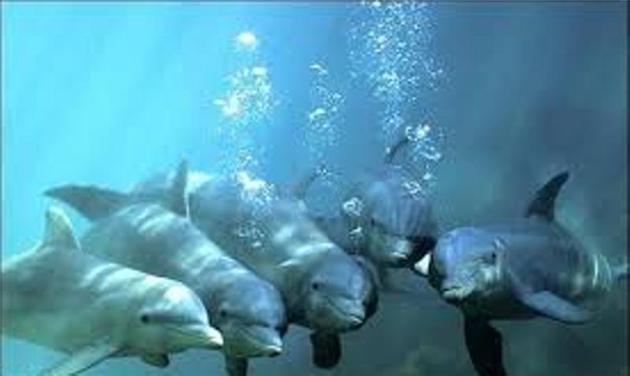 بررسی پراکنش و جمعیت دلفین گوژپشت در خلیج فارس