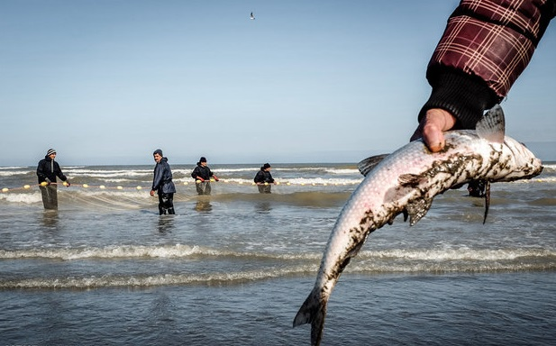 فصلِ تَرک ماهی ها
