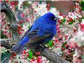 نجات بخش یک میلیون پرنده باشیم