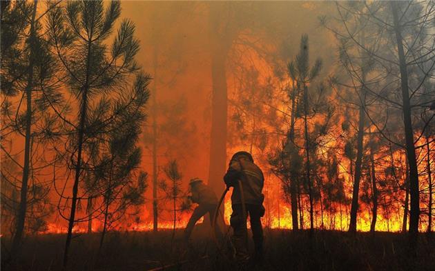 97 درصد آتش سوزی جنگل ها عمدی است