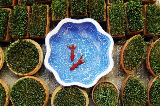 تحریم سبزه و ماهی قرمز، محیط زیستی نیست
