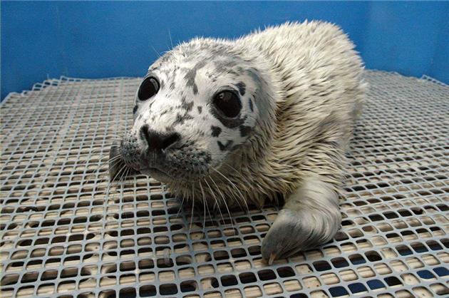 مراکز امداد و نجات پستانداران دریایی ایجاد می شود