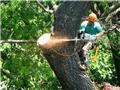 شهرهای آمریکا سالانه ۳۶ میلیون اصله درخت از دست میدهند