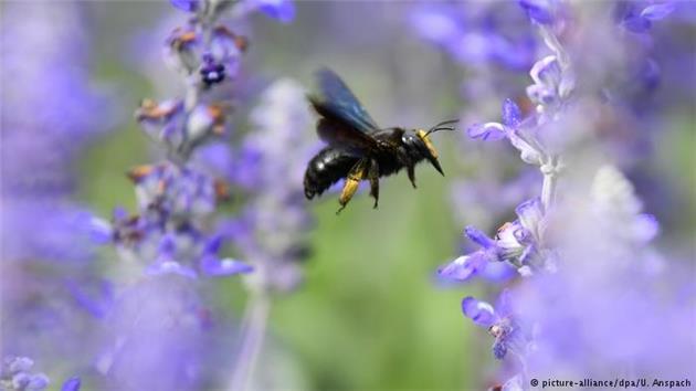 جهان بدون زنبور چگونه است؟