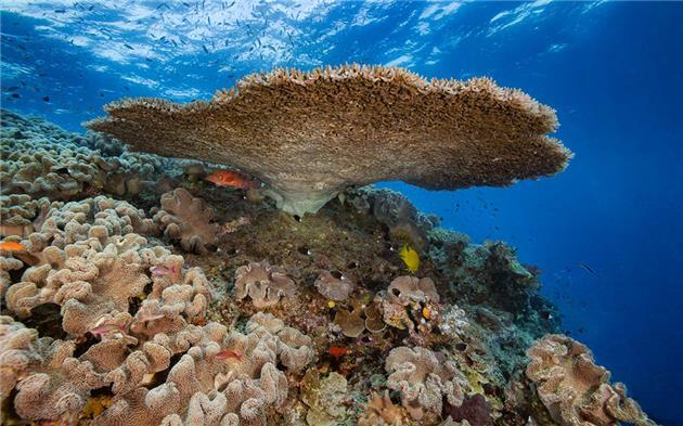 موشهای مهاجم صخرههای مرجانی را تهدید میکنند