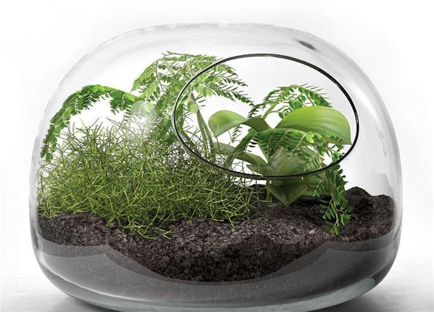 شرایط مناسب برای نگهداری گیاهان در تراریوم چیست؟