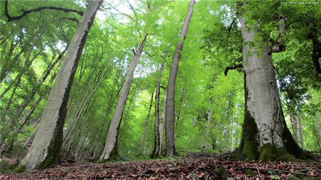 ادعای تخریب کامل جنگلهای کشور در سالهای آینده علمی نیست