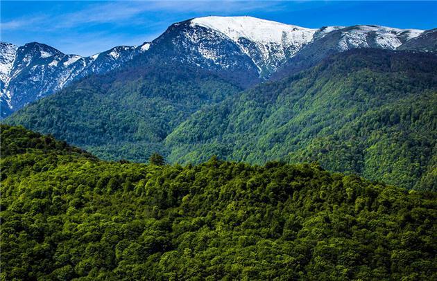 ۳۱۰ هزار هکتار از جنگلهای هیرکانی ثبت جهانی شد