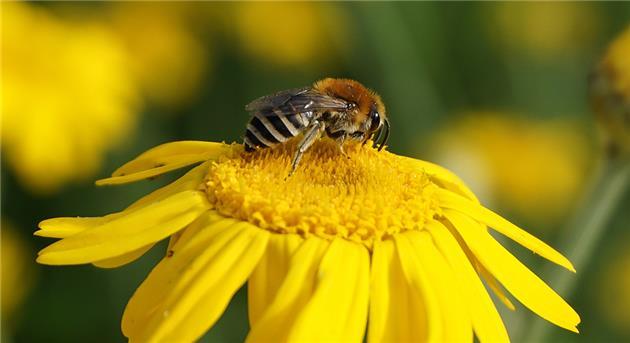 علت تلف شدن ۵۰۰ میلیون زنبور در برزیل