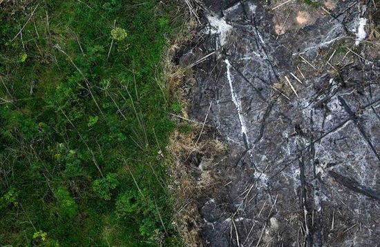 جنگلهای آمازون با شدتی بیسابقه میسوزند
