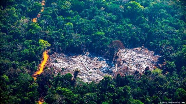 جنگلهای آمازون با سرعتی دو برابر پارسال در حال نابودی است