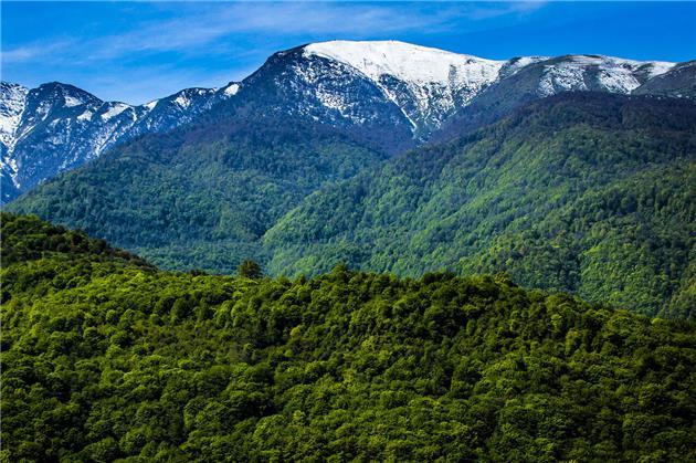 اجرای طرح جایگزین جنگلهای هیرکانی تسریع یابد