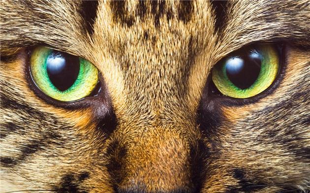 ابداع یک نرم افزار برای بررسی چشم حیوانات