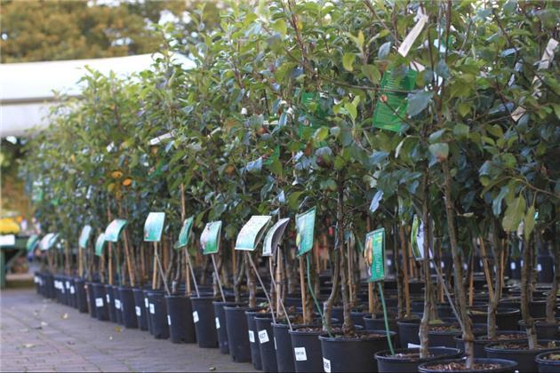 نهضت درختکاری همزمان با سراسر کشور در سمنان آغاز شد