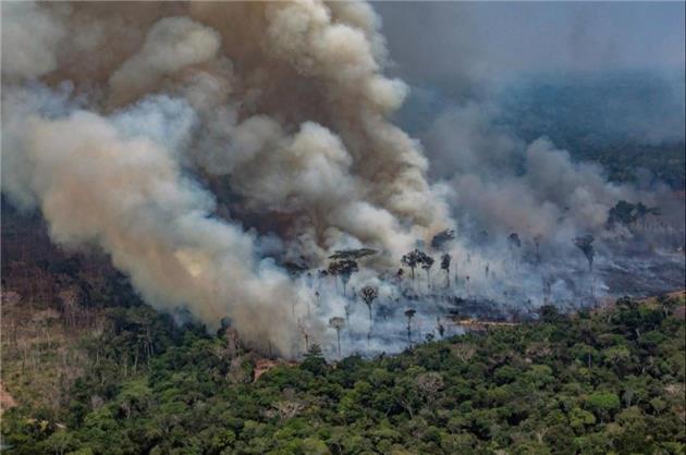 بالاترین رکورد جنگلزدایی در آمازون طی ماه نوامبر