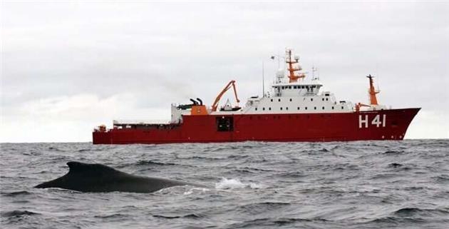 نظارت بر نهنگها از فضا