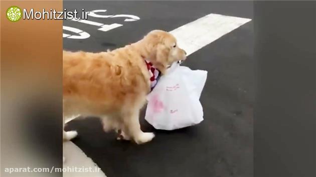 سگی که غذای صاحبش را از دلیوری می گیرد!