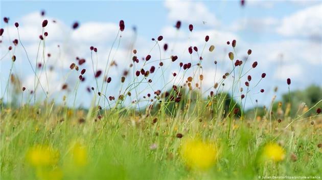 دانشگاه لایپزیگ بزرگترین فهرست گیاهان در جهان را گرد آورد