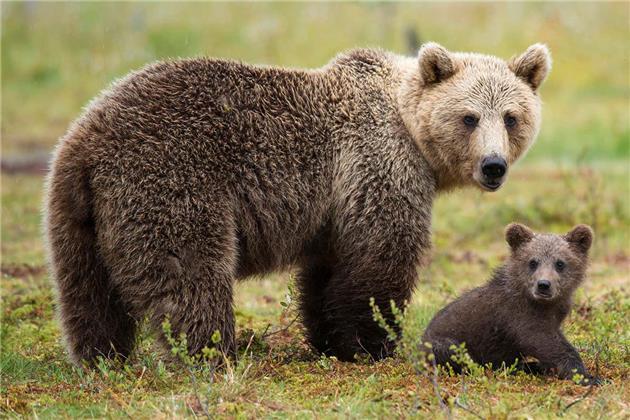 سلولهای سرطانی مثل خرسها به خواب زمستانی میروند