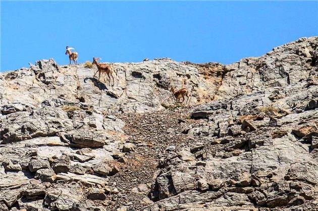افزایش 78 درصدی مناطق تحت مدیریت حفاظت محیط زیست در لرستان