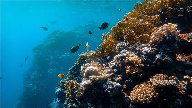 همهگیری، سال آرام اقیانوسی را رقم زد