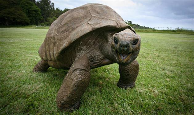 لاکپشت ۱۸۸ ساله، سالخوردهترین حیوان روی خشکی