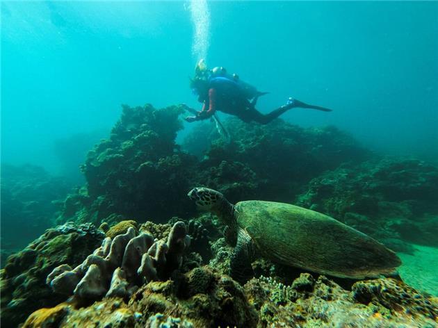 پاکسازی صخره های مرجانی در فیلیپین