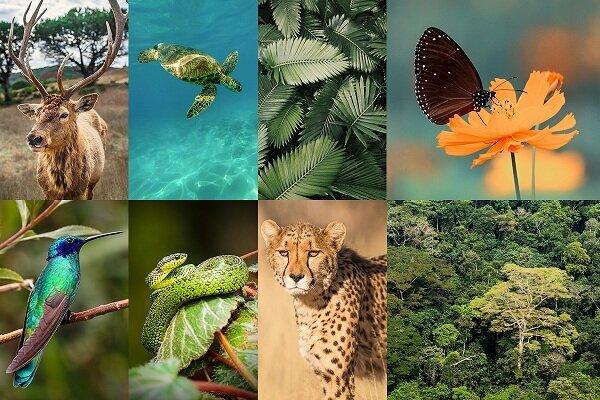 درخواست مدیران تجاری جهان برای جلوگیری از تخریب طبیعت